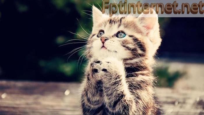 Ngủ Mơ Thấy MÈO Báo Hiệu Điềm Gì? Đánh Đề Số Nào? 1 FPT INTERNET - Lắp Mạng FPT - Lắp Wifi FPT - Lắp Internet FPT
