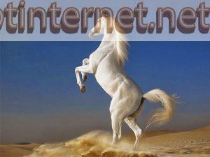 Ngủ MƠ THẤY NGỰA Báo Hiệu Điều Gì? Tốt Hay Xấu? Đánh Số Gì? 3 FPT INTERNET - Lắp Mạng FPT - Lắp Wifi FPT - Lắp Internet FPT